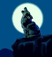 coyote303