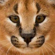 Mean Kitty