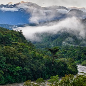 Jungle River Valley in the Cloud Forest 2MG-.jpg