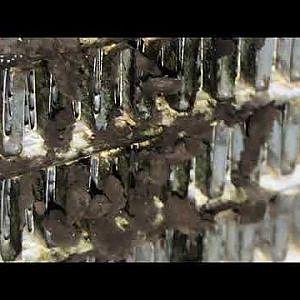 Mold growth on Prius evaporator